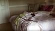 Phát hiện rắn cực độc trên giường ngủ thiếu nữ gây sốc