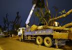 Lặng lẽ đêm đầu đánh chuyển cây xanh Kim Mã về nhà mới