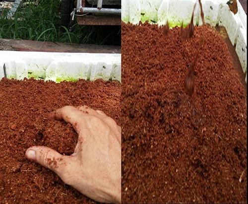 trồng rau sạch, trồng rau sạch từ xơ dừa, trồng rau củ quả bằng xơ dừa