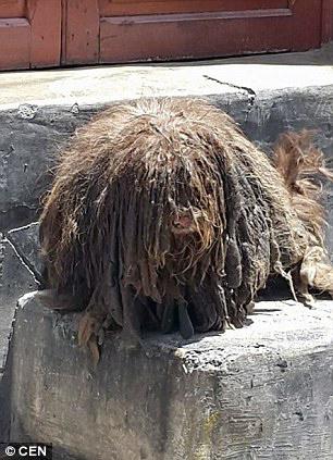 Chú chó như quái thú sau khi bị chủ bỏ rơi
