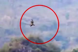 Clip ghi lại cảnh rồng khổng lồ bay trên núi gây bão mạng