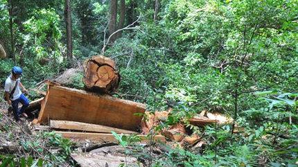 Lâm tặc quây trạm, chém chết nhân viên bảo vệ rừng