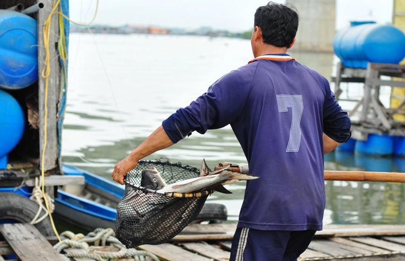 cá chết, thiếu ôxy, xã Long Sơn, chế biến hải sản, bà rịa vũng tàu