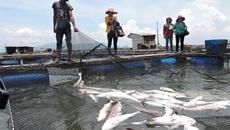 Dân phản ứng kết luận 254 tấn cá chết do thiếu ôxy