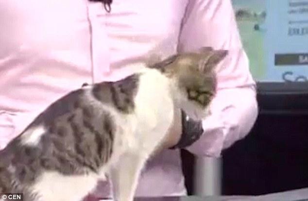 bản tin thời sự tạm dừng, chú mèo xuất hiện bản tin