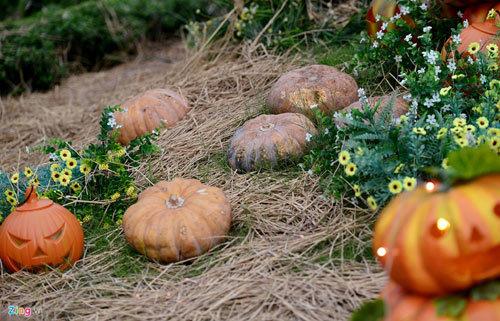 Vườn bí ngô đậm chất Halloween ở Sài Gòn