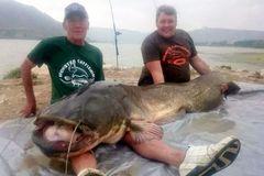 Kinh ngạc cá trê khổng lồ 90kg, dài hơn 2m
