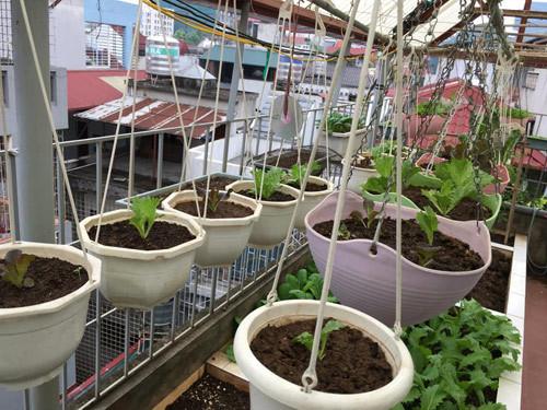 Vườn rau 50m2 ăn không xuể của bà mẹ Hà thành