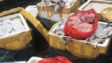 Bắt xe tải chở gần 700kg thịt chó, mèo trên đường ra chợ