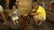 Thả rông chó: Chủ chó coi thường sự an toàn của người khác