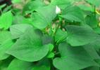 10 siêu cây hút khí độc nên trồng ngay trong nhà - ảnh 4