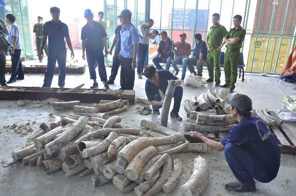 ngà voi, châu Phi, gỗ rỗng ruột, nhập lậu