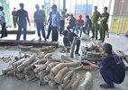 Ngà voi Châu Phi 40 tỷ giấu trong các đoạn gỗ rỗng ruột