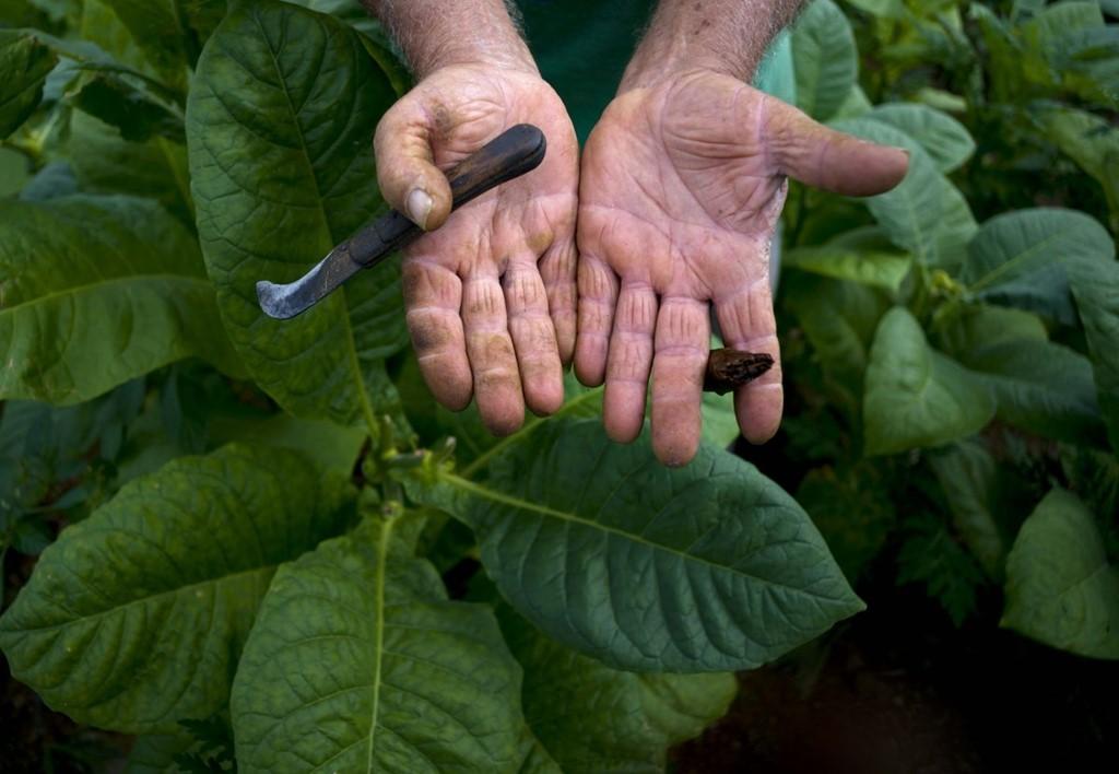 Sự cầu kỳ làm nên thương hiệu xì gà Cuba