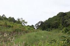 """""""Luật rừng"""" trên đỉnh Trường Sơn"""