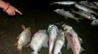 Hà Nội thông tin về cá chết bất thường tại hồ Linh Đàm