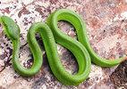 BV Bạch Mai cấp cứu 3 trẻ nhỏ bị rắn độc cắn