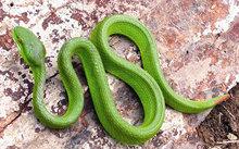 BV Bạch Mai cấp cứu 3 trẻ nhỏ bị rắn độc cắn - VNN