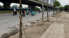 Hà Nội: Đề nghị 'cấm cửa' nhà thầu trồng cây chết khô