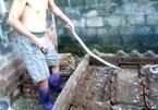 Rùng mình người đàn ông mình trần bắt 28 con rắn hổ mang