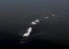 Quái vật Loch Ness xuất hiện ở Alaska?