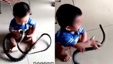10 clip nóng: Bé 2 tuổi chơi với rắn 'khủng' gây sốc