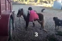Clip bé gái leo ngựa sau 16 lần thất bại thu hút 10 triệu người xem
