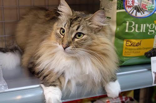 Điểm dừng chân đặc biệt tại Đài Loan cho những người yêu mèo