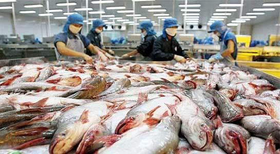 cá tra, doanh nghiệp xuất khẩu cá tra, doanh nghiệp cá tra việt nam