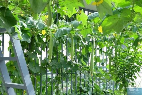 Bà mẹ trẻ ở Sài Gòn sở hữu 2 vườn rau xanh mướt khiến ai nhìn cũng mê mẩn