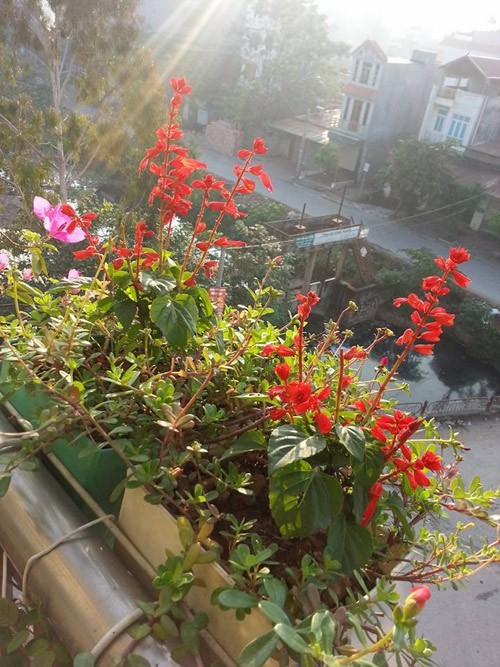 trồng rau sạch, vườn rau sạch, vườn rau trên sân thượng