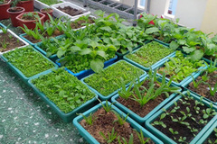 Lo con ăn nhầm rau hóa chất, mẹ 8x quyết biến sân thượng thành vườn xanh mát