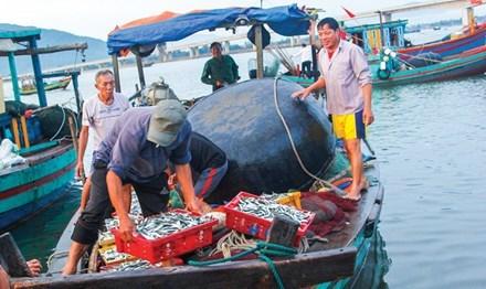 sự cố fomosa, sự cố môi trường biển, biển miền Trung, Formosa