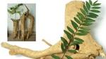Loài cây giúp trẻ hóa, tăng ham muốn cho quý ông