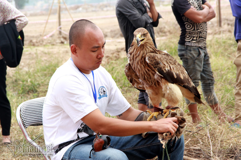 Đại bàng hơn 200 triệu hùng dũng giữa trăm chim săn mồi