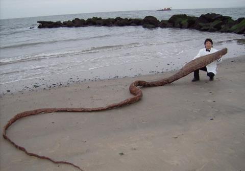 'Quái vật' bí ẩn dạt vào bờ biển Nhật Bản
