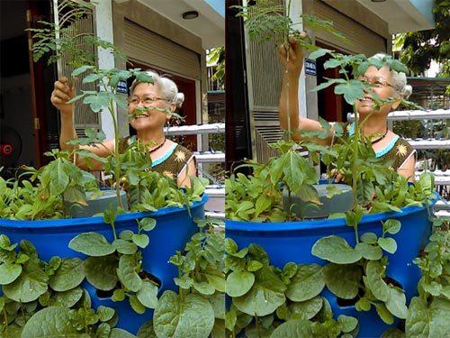 Chàng trai, bỏ mức lương mơ ước, bỏ việc, trồng rau, rau sạch, vườn rau, thùng xốp, chậu nhựa, ban công