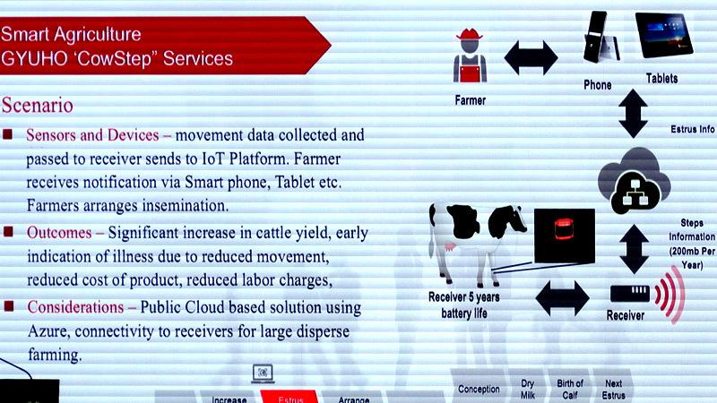 ứng dụng IoT,chăn bò