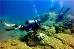 Đổ 1,5 triệu m3 chất thải xuống biển: San hô, tôm cá khó sống?