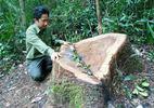 Cách chức trạm trưởng để lâm tặc phá rừng