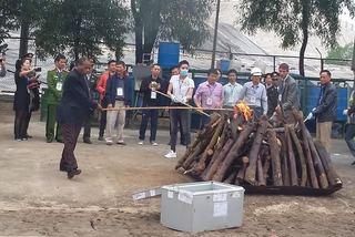 Nghiền nát và đốt cháy 2 tấn ngà voi, 70kg sừng tê giác