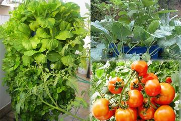 'Chàng trai sợ chết sớm' dạy cách trồng rau sạch dễ như ăn kẹo