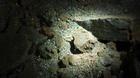 Nhũ đá vịnh Hạ Long đau đớn 'rỉ máu' trong đêm