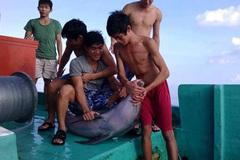 Xác định được nhóm ngư dân chặt đầu, mổ bụng cá heo