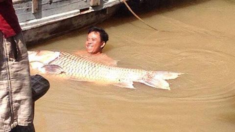 Ngư dân miền Tây bắt được cá hô vàng nặng 125kg