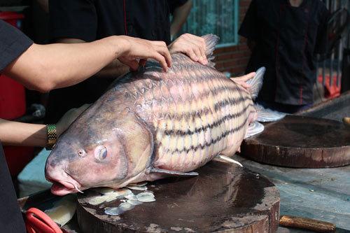 'Tứ quý' cá khủng từ sông Mê Kông 'bơi' về Hà Nội