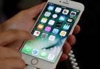 Lý do Apple chưa thể sản xuất iPhone màn hình OLED