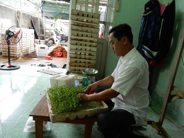 rau mầm, rau sạch, trồng rau, trồng rau mầm, nông dân trồng rau, thuốc bảo vệ thực vật