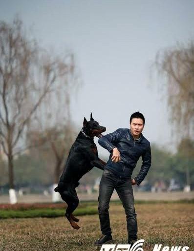Chàng trai Hà Thành sở hữu trang trại chó Doberman tiền tỷ