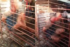 Người đàn ông bị nhốt vào cũi sắt vì nghi trộm chó